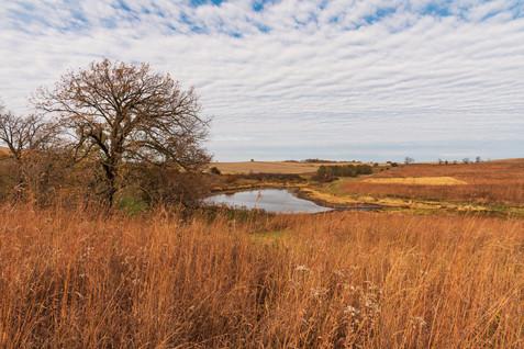 savanna at beegly property (1 of 1).jpg