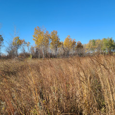 Thelman Wildlife Management Area
