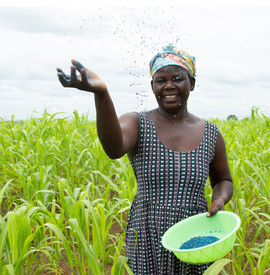Farmer using Aflasafe on her field
