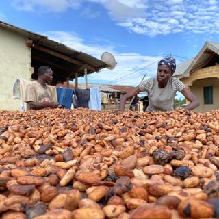 Cocoa reportage
