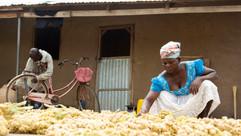 Farmer drying sorghum