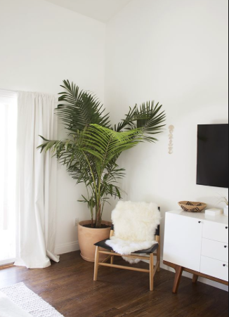 A tree in an interesting pot or basket can add warmth to any room