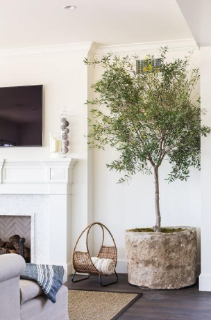 House plants grand and small can add depth to any room .