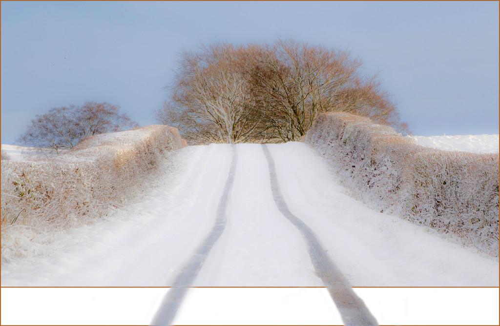 snow track.jpg