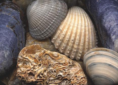 Shellshapes