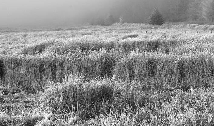 Hard frostfield