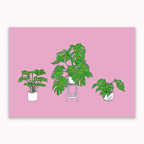 Cheese Plant, Art Print