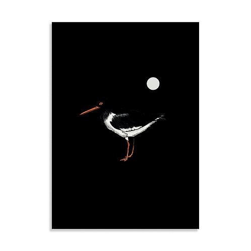 Oyster Catcher, Art Print