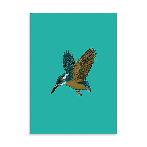 Kingfisher, Art Print