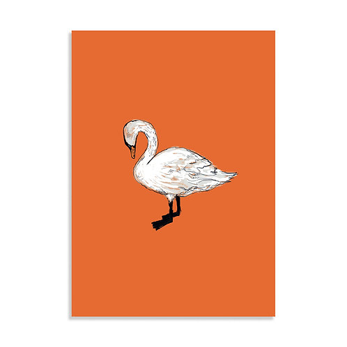 Swan, Art Print