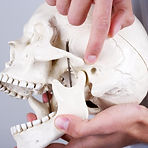 temporomandibular-joint.jpg