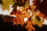leaf-fall-autumn-fall-leaves-background-