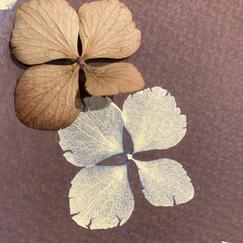 Exposed petals