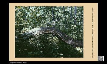 curva de tronco más detalles SEQAA banner sm.jpg