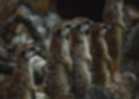 group-of-brown-meerkats-2713133.jpg