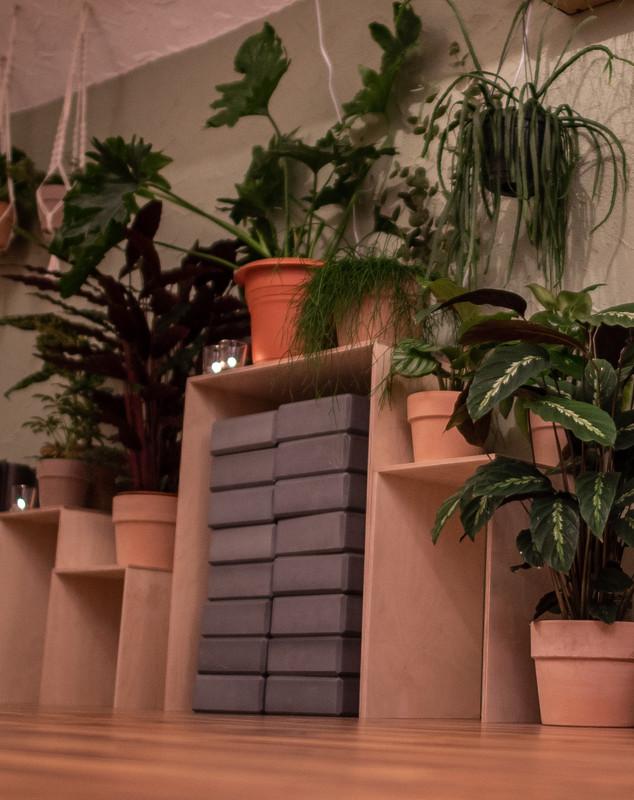 Pflanzenwand im Praxisraum Dschungel Yoga