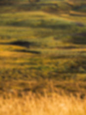 islandsk farvespil.jpg