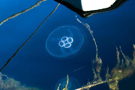 havets hjerte.jpg