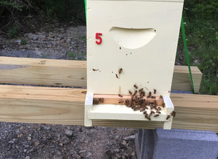 Getting Your First Honey Bees