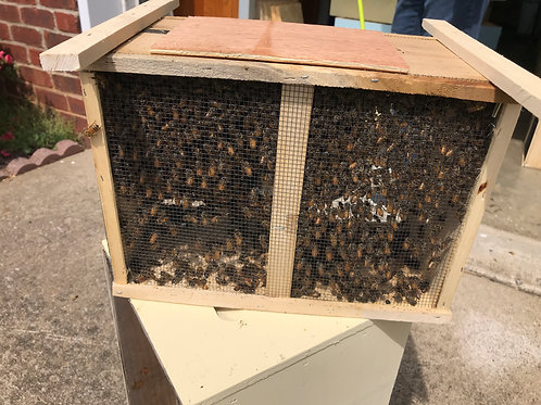 2021 3 Pound Package of Bees