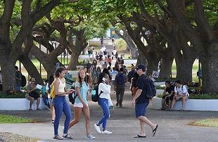 University-of-Hawaii-at-Manoa-campus-fir