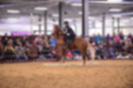 Jordyn Delmet has been riding horses for over 18 years and has competed successfully in Extreme Obstacles Challenges, Competitive Trail, English Pleasure, and  Western Pleasure. Jordyn latest accomplishment was training her  first Mustang Gambler for the Midwest Horse Fair's TIP Challenge. She took a leap of faith taking her mustang in a mounted trail class at the fair placing 6th this was approximately their 4th ride together. That was winning for her! She has won numerous awards over the years,  she was in the top five for the Midwest Horse Fair's Star Search and is the NBRC 2016 Intermediate Extreme Trail Challenge Champion. Her passion in training horses had successfully brought her to working with rescue horses and now mustangs. Jordyn has learned the art of communication that is needed to create a positive horse and rider team.  Jordyn enjoys teaching natural horsemanship building a strong foundation of respect on the ground using desensitizing techniques, obstacles and more. Jor