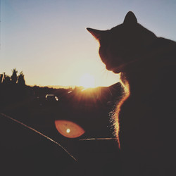 Cat at Sunset, 2016