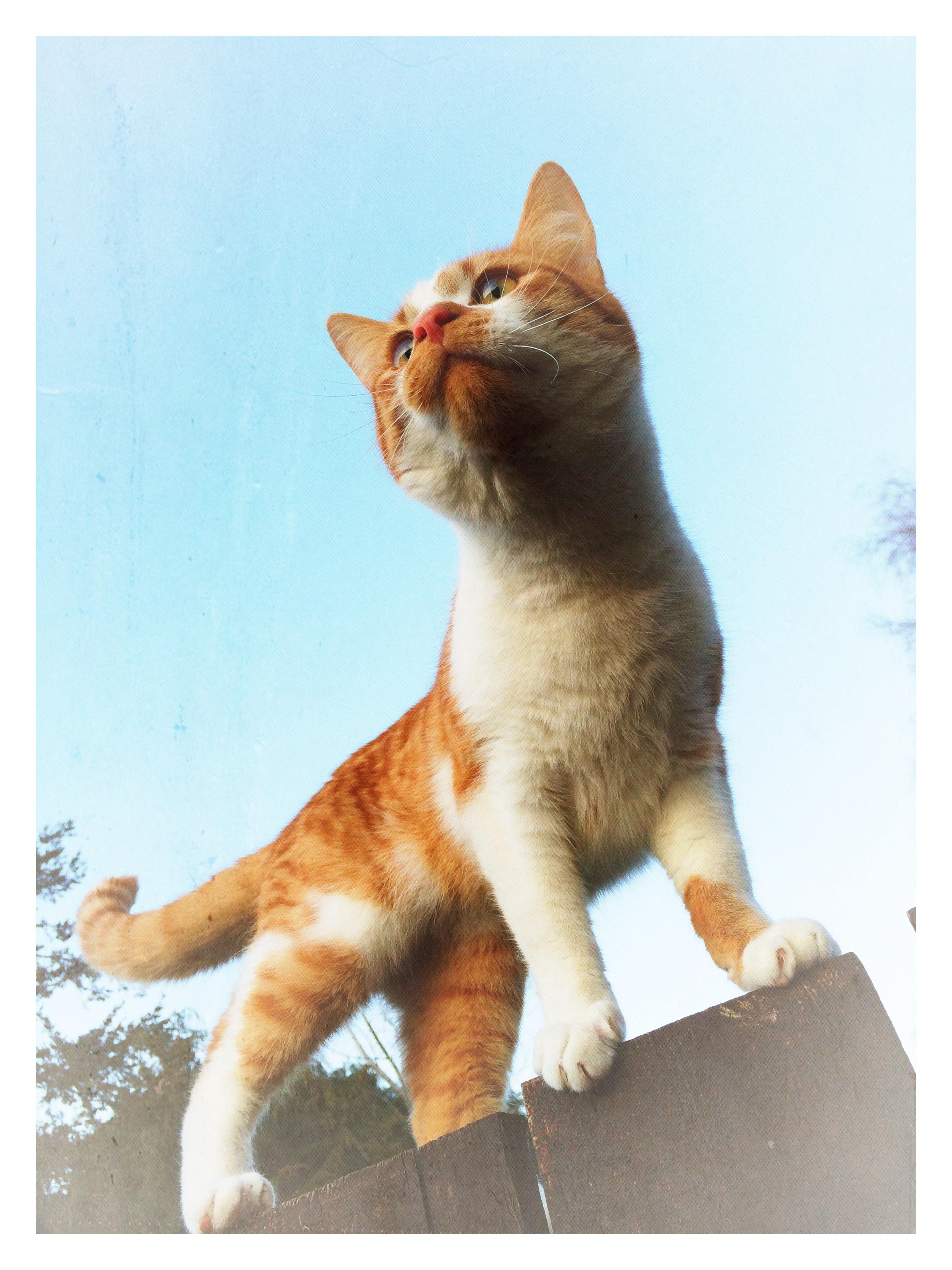 Cat, 2014