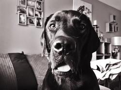Dog, 2016