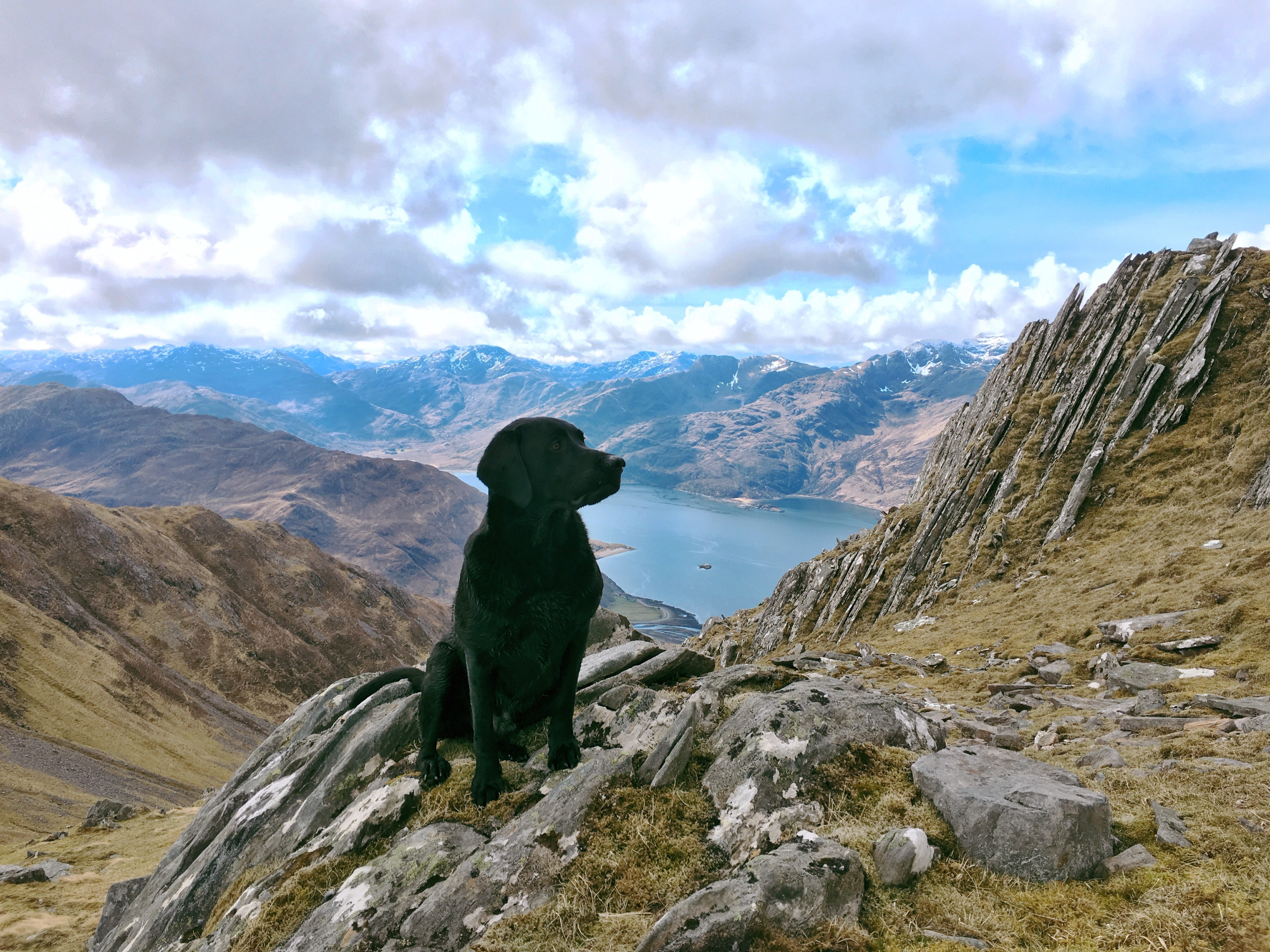 The dog on Beinn Sgritheall, 2018