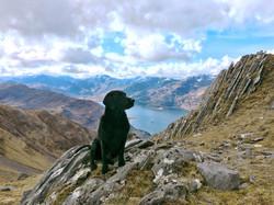 The dog on Beinn Sgritheall, 2018