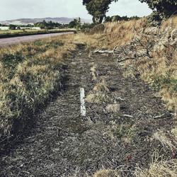 Abandoned Road, 2016