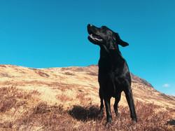 The dog, 2018