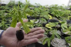 Washington state to pardon 3,500 drug convictions, governor says