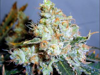 Gov. Northam approves bill to decriminalize marijuana in Virginia