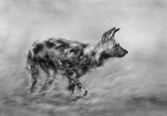 wild dog hunting