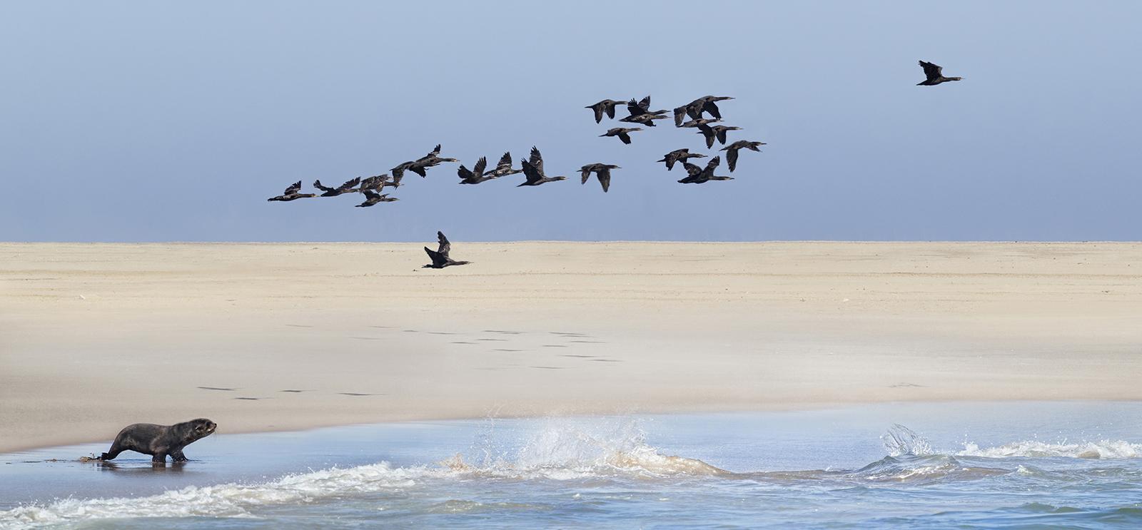 Namib coastline