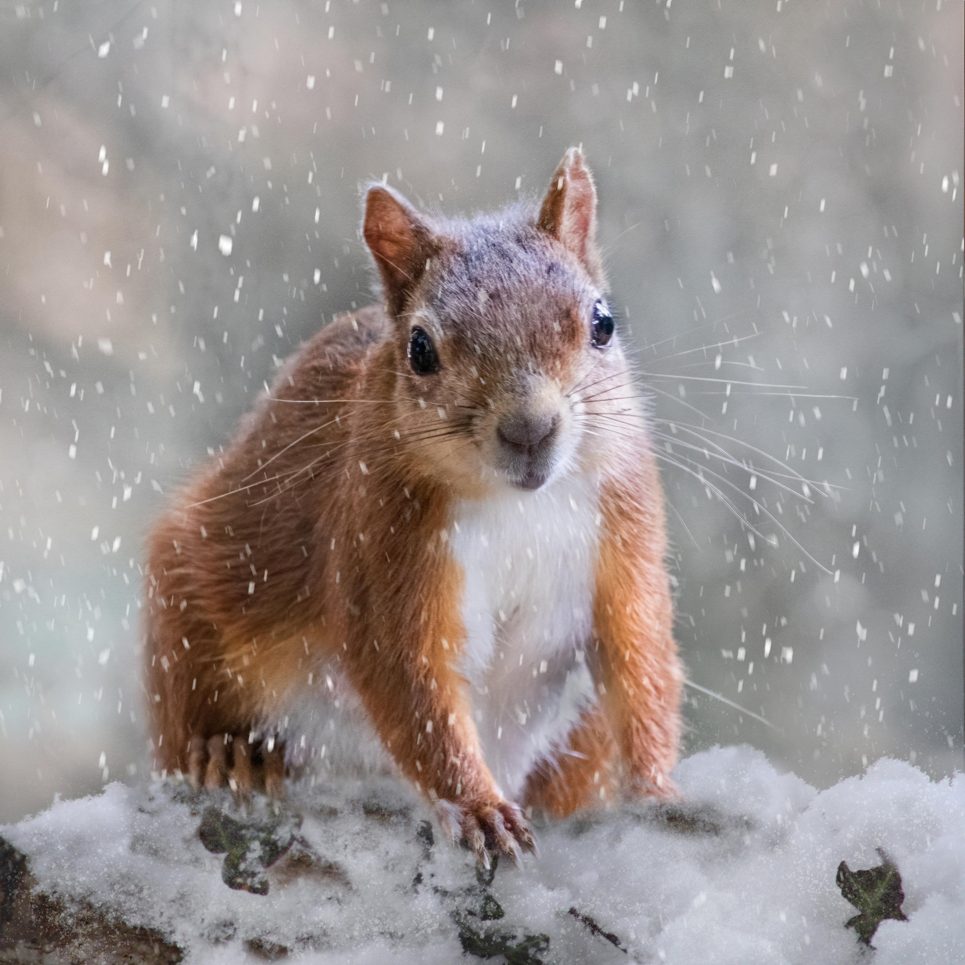 squirrel & snow