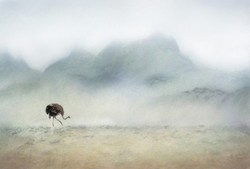 the ostrich's journey