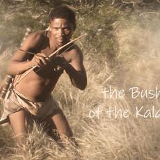 The Bushmen of the Kalahari