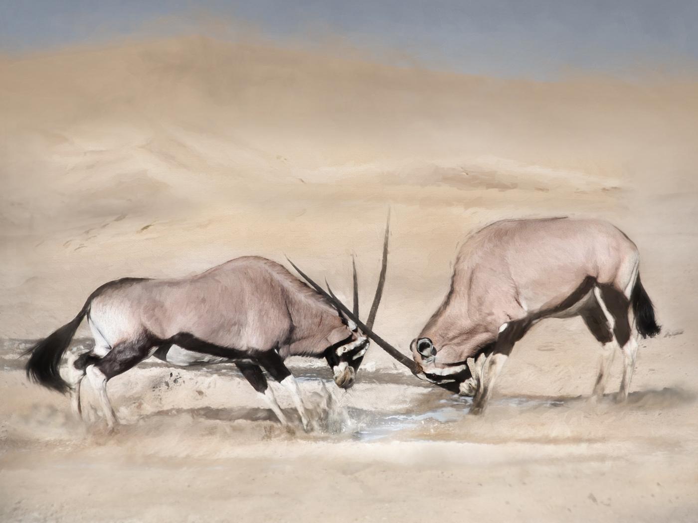 gemsbok in dunes