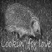 looking for love2.jpg