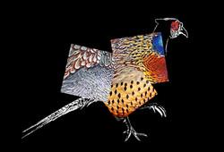 deconstructed pheasant