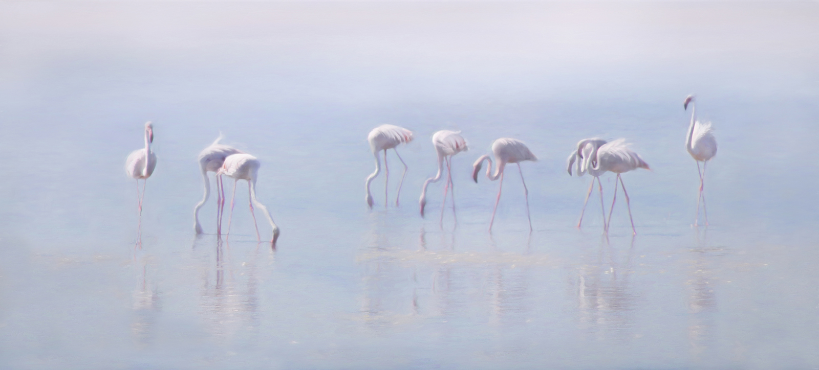misty flamingos
