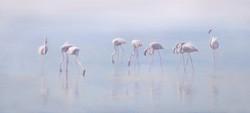 misty flamingos