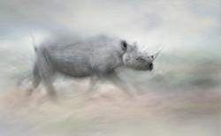 final rhino