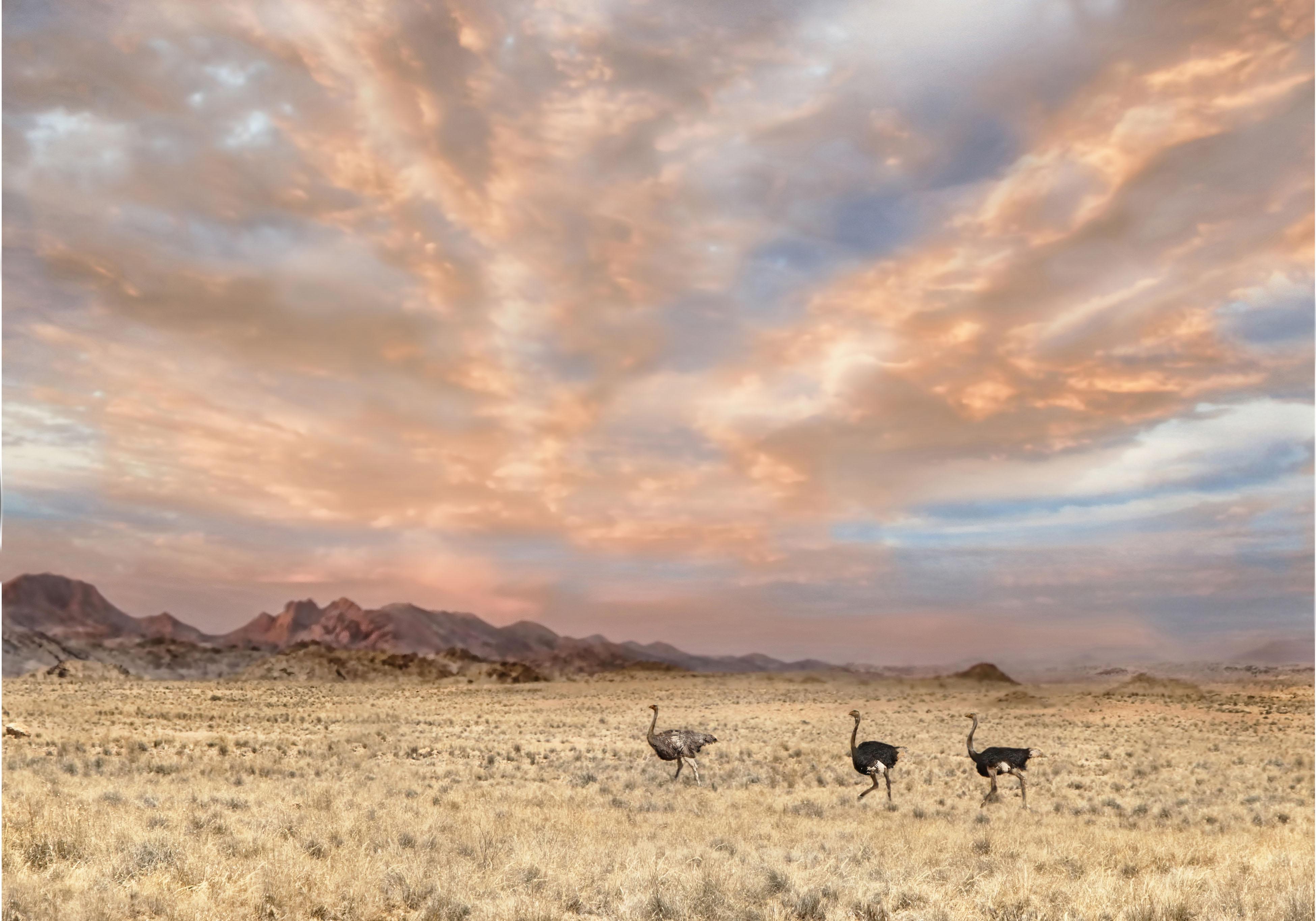 3 Namib landscape