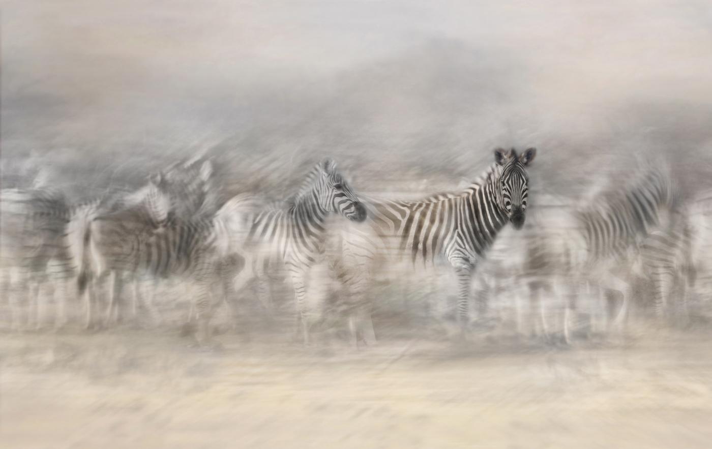 zebra lookout
