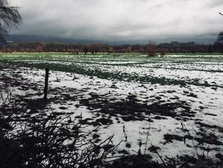 Bijna winter