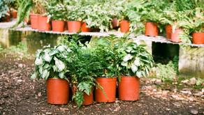 What Pot/Planter Should I buy?
